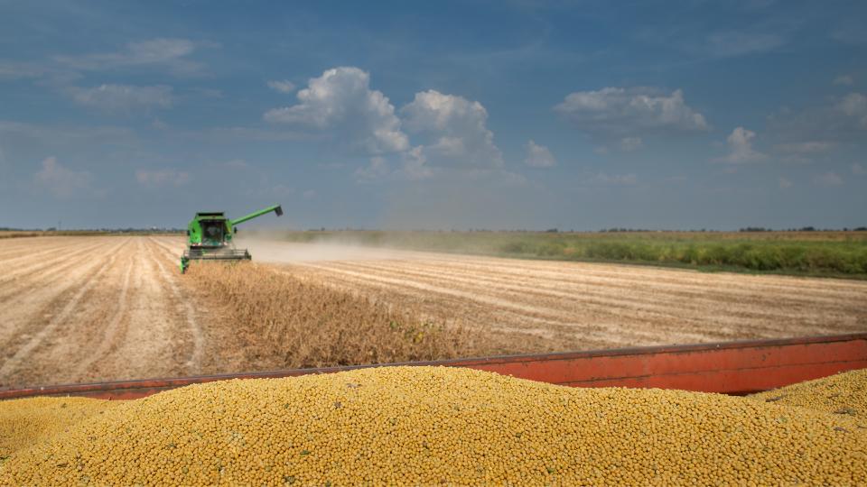 Focus: Demand For Grain Persists